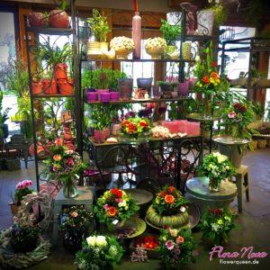 Flora Nova Blumen_IMG_2765-300x300